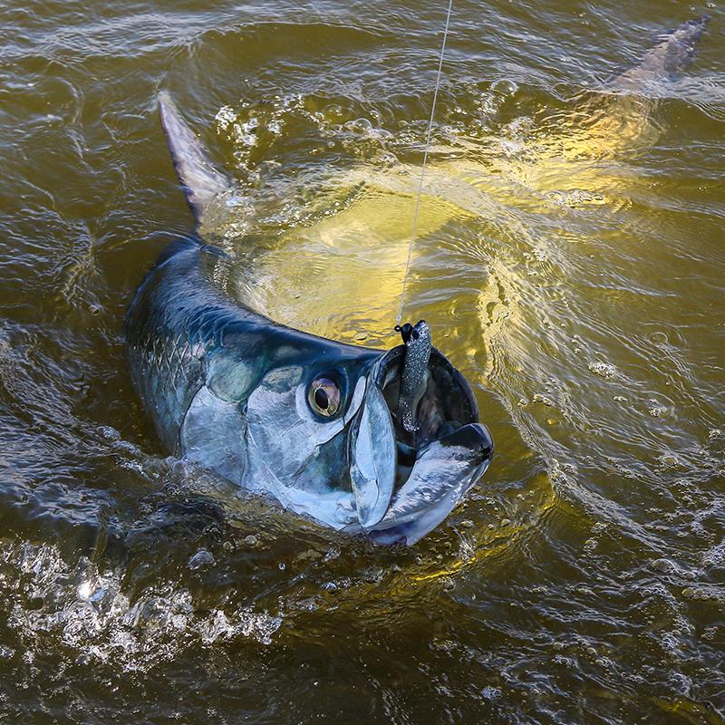 Everglades tarpon fishing with Captain Mark Bennett-© Tarponsnook.com